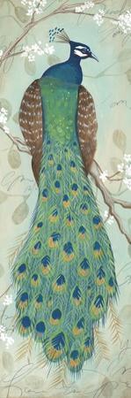 Peacock I by Steve Leal