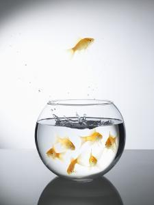 Goldfish jumping out of a bowl and escaping from the crowd by Steve Lupton