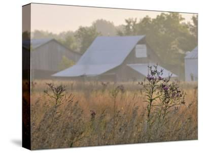 Barns and Wildflowers in the Maple Grove Road Rural Historic District