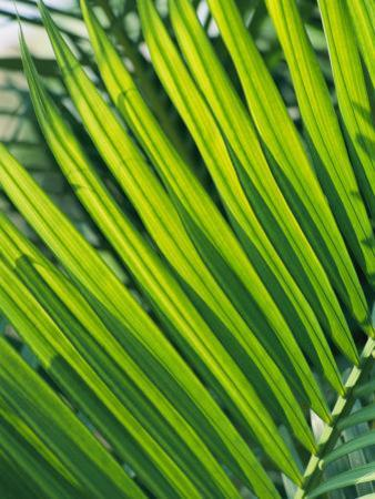 Close View of Palm Fronds