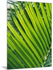 Close View of Palm Fronds by Steve Raymer