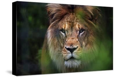 Portrait of a Lion Furrowing His Mane in a Forest at a Sanctuary for Big Cats