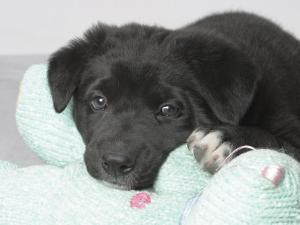 Puppy Lying on Stuffed Animal Toy by Steve Starr