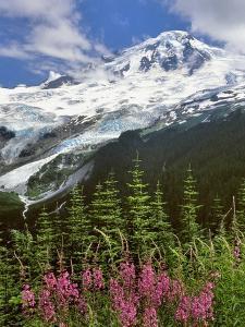 Fireweed Flowers below Mt. Baker by Steve Terrill