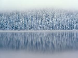 Lost Lake and Snow-Covered Douglas Firs by Steve Terrill