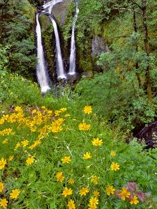 Oregon, Columbia River Gorge National Scenic Area. Triple Falls by Steve Terrill