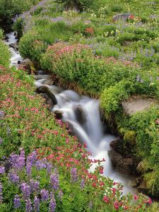 Oregon, Mt. Hood Wilderness. Wildflowers Along Elk Cove Creek by Steve Terrill