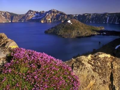 Penstemon Blooms on Cliff Overlooking Wizard Island by Steve Terrill