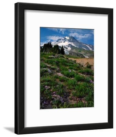 Phlox Wildflowers & Mt. Hood