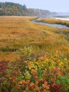 USA, Maine, Kennebunkport. Tidal Marsh on the Mousam River by Steve Terrill