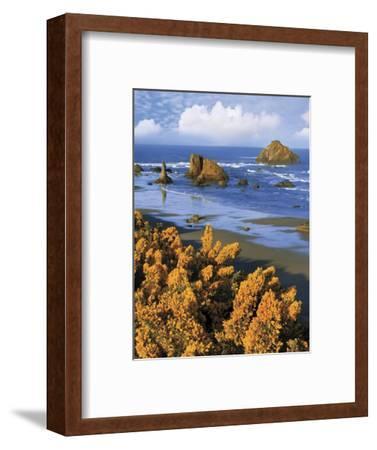 USA, Oregon, Bandon. Face Rock and Wild Gorse Plants