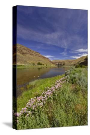 USA, Oregon. Milkweed Along the John Day River