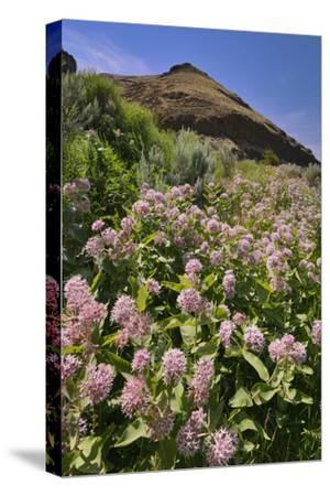 USA, Oregon. Milkweed and Cliff