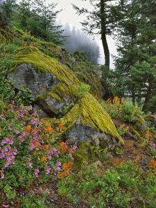 USA, Oregon, Mt. Hood NF. Hillside of Trees and Wildflowers by Steve Terrill