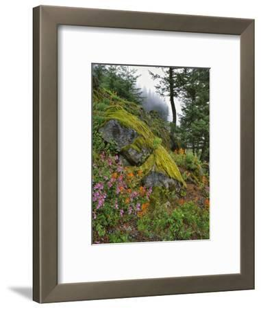 USA, Oregon, Mt. Hood NF. Hillside of Trees and Wildflowers