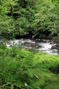 USA, Oregon. Scenic of Little Sandy River and Ferns by Steve Terrill