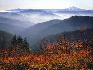 View of Mount Hood with Wild Huckleberry Bushes in Foreground, Columbia River Gorge, Washington by Steve Terrill