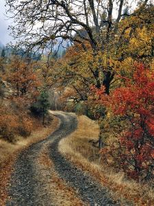 Washington, Columbia River Gorge. Road and Autumn-Colored Oaks by Steve Terrill