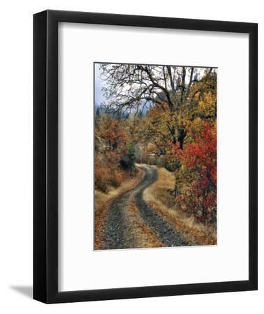 Washington, Columbia River Gorge. Road and Autumn-Colored Oaks
