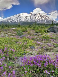 Washington State, Gifford Pinchot NF. Mount Saint Helens Landscape by Steve Terrill