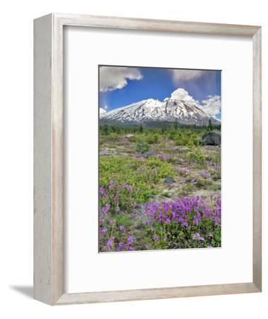 Washington State, Gifford Pinchot NF. Mount Saint Helens Landscape