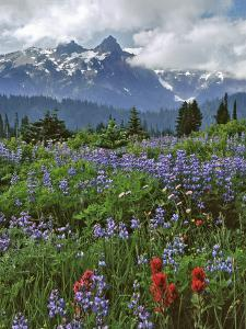 Washington State, Mount Rainier NP. Lupine and Paintbrush in Meadow by Steve Terrill