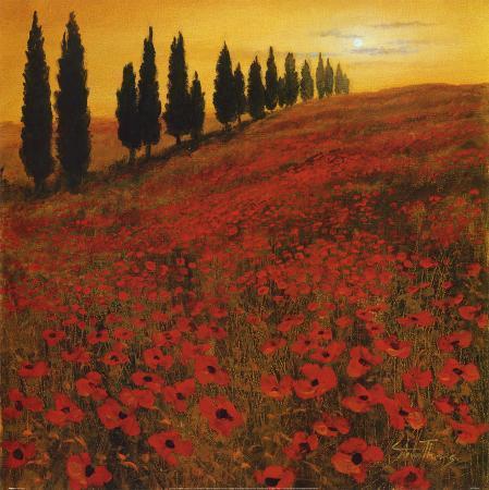 steve-thoms-poppies