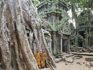 Cambodia, Siem Reap, Angkor, Ta Prohm Temple by Steve Vidler