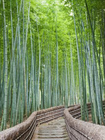 Japan, Kyoto, Arashiyama, Adashino Nembutsu-ji Temple, Bamboo Forest