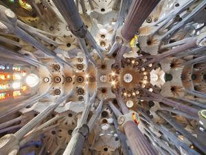 Spain, Barcelona, Sagrada Familia, Interior by Steve Vidler