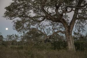 A full moon above jaguar habitat in Peru. by Steve Winter