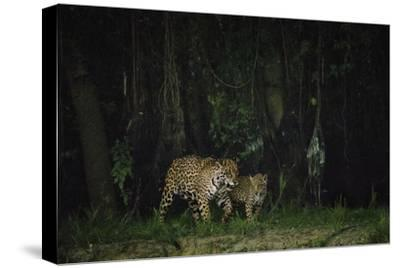 A Mother and Cub Patrol Along the Cuiaba River after Dusk