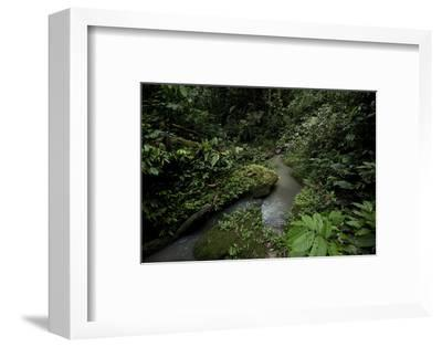 A Rainforest Stream in Yausuni National Park