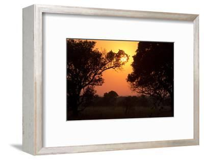 An Orange Sunrise Appears Behind Backlit Trees in the Phinda Game Reserve