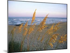 Beach Scene with Sea Oats by Steve Winter