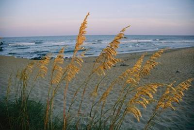 Grasses In The Foreground Of A Coastal Beach Scene Sway In The Breeze. by Steve Winter