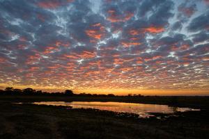 Sunrise over the Brazilian Pantanal by Steve Winter