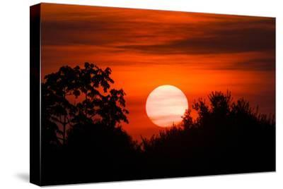 Trees Silhouetted Against a Sunset in the Brazilian Pantanal
