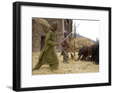 Women with Yaks Threshing Barley on the Road from Leh to Kargil