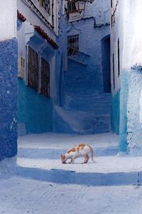 Cat in Alleyway in Morocco by Steven Boone