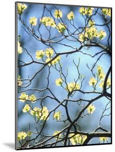 Branches of Spring Flowering Tree by Steven Emery