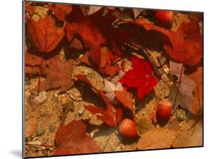 Fallen Leaves and Acorn Seeds by Steven Emery