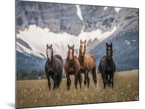 Horses Along the Rocky Mountain Front, Montana. by Steven Gnam