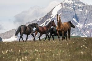Horses Along the Rocky Mountain Front, Montana by Steven Gnam