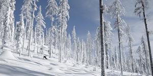 Snowboarder Carving in the Whitefish Range, Stryker Ridge, Montana by Steven Gnam