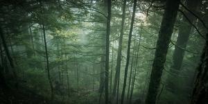 Temperate Rainforest of Western Washington by Steven Gnam