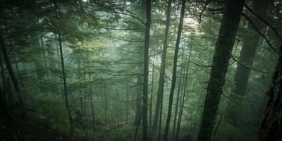Temperate Rainforest of Western Washington