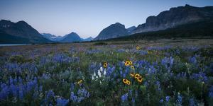 Wildflowers Along the Rocky Mountain Front. Glacier National Park, Montana by Steven Gnam