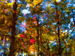 Sedgwick Reflection by Steven Maxx