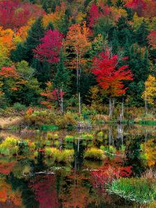 Vermont Fall #2 by Steven Maxx
